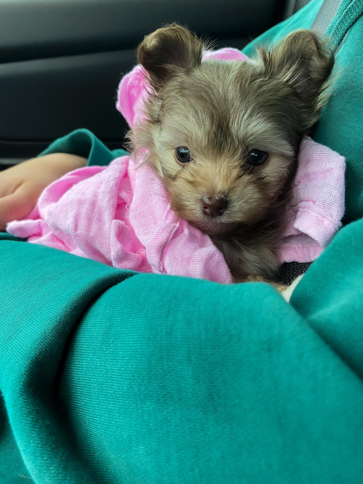 Meet Hazel