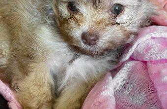 Meet Hazel the Puppy