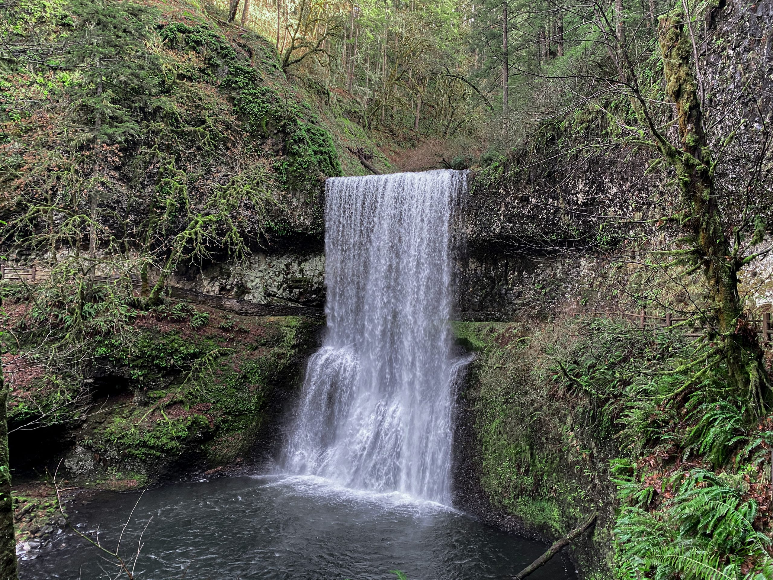 Picture of large waterfall in SIlver Falls State Park
